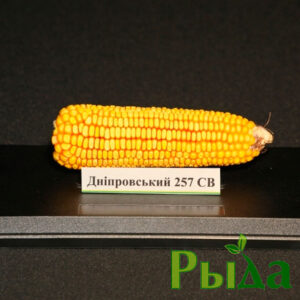 Кукуруза Днепровский 257 фото