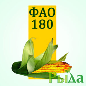 Кукуруза Пивиха фото
