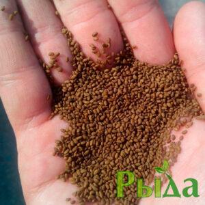 semena-lyucerny-nadezhda
