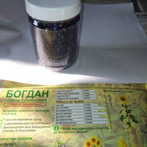 Подсолнечник Богдан (фото 2)