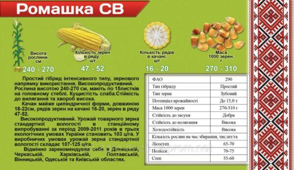 Кукуруза Ромашка