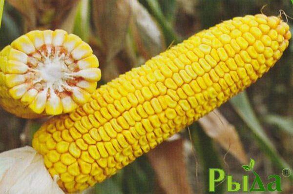 Кукуруза Яровец
