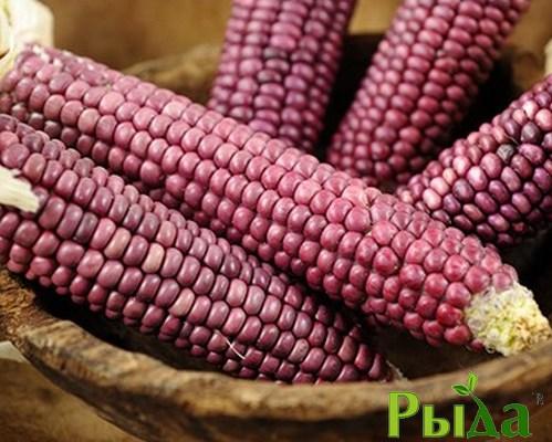 Семена кукурузы Рубин