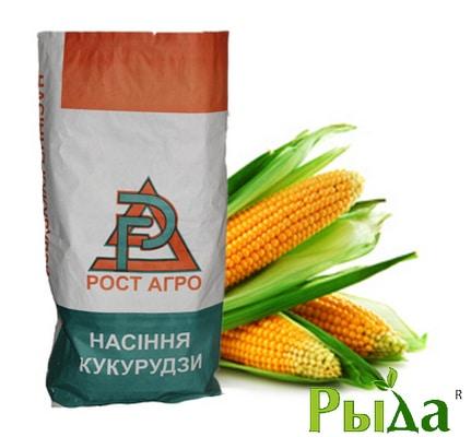 Семена кукурузы Рава