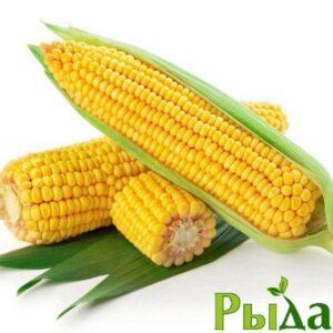 Семена кукурузы Любава (ФАО 260)