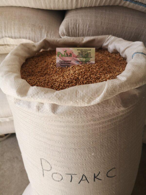 Насіння пшениці Ротакс
